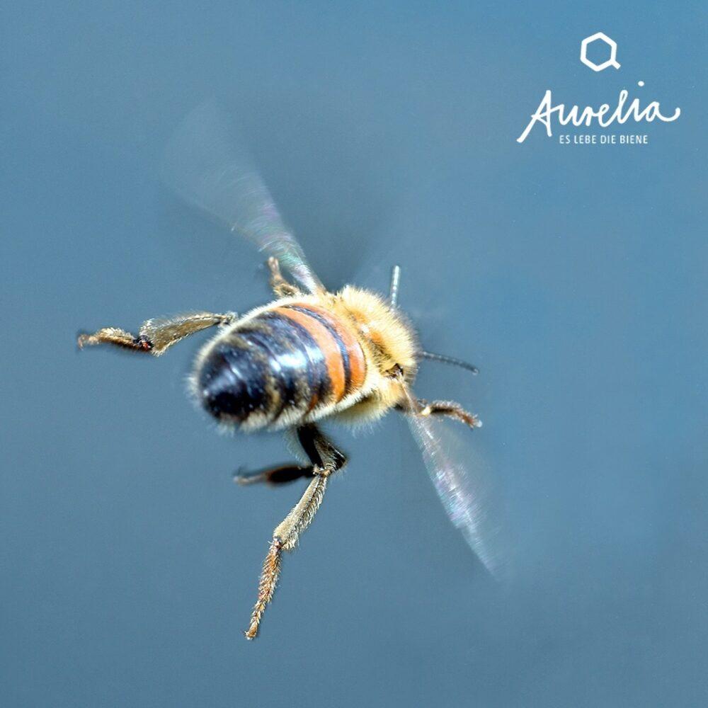 Die Honigbiene 🐝 auf dem Foto macht sich auf den Weg ins  ...