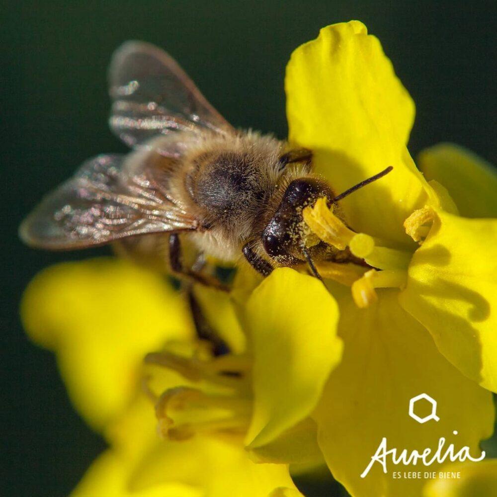 Es gibt gute Nachrichten für alle Bienen, Imkereien und die ...