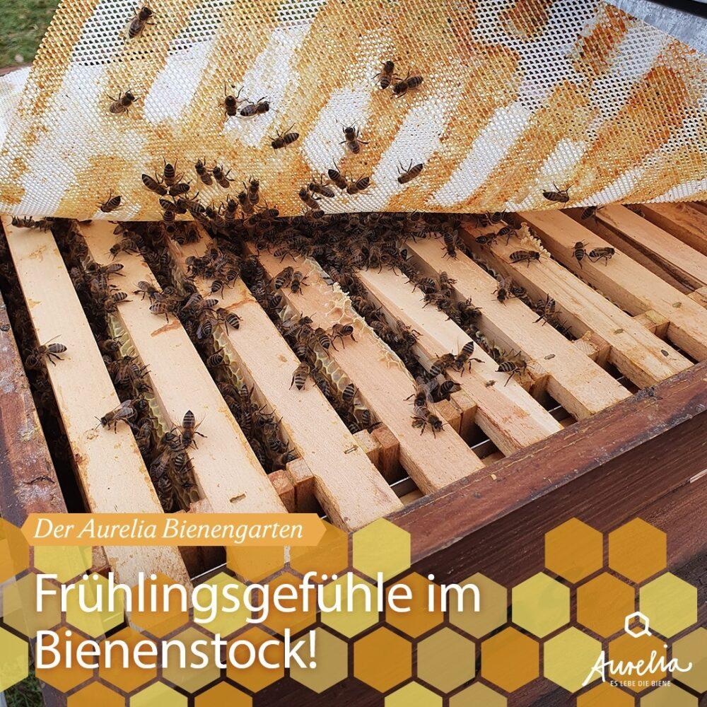 Im Bienengarten der Aurelia Stiftung haben wir mit unseren H ...