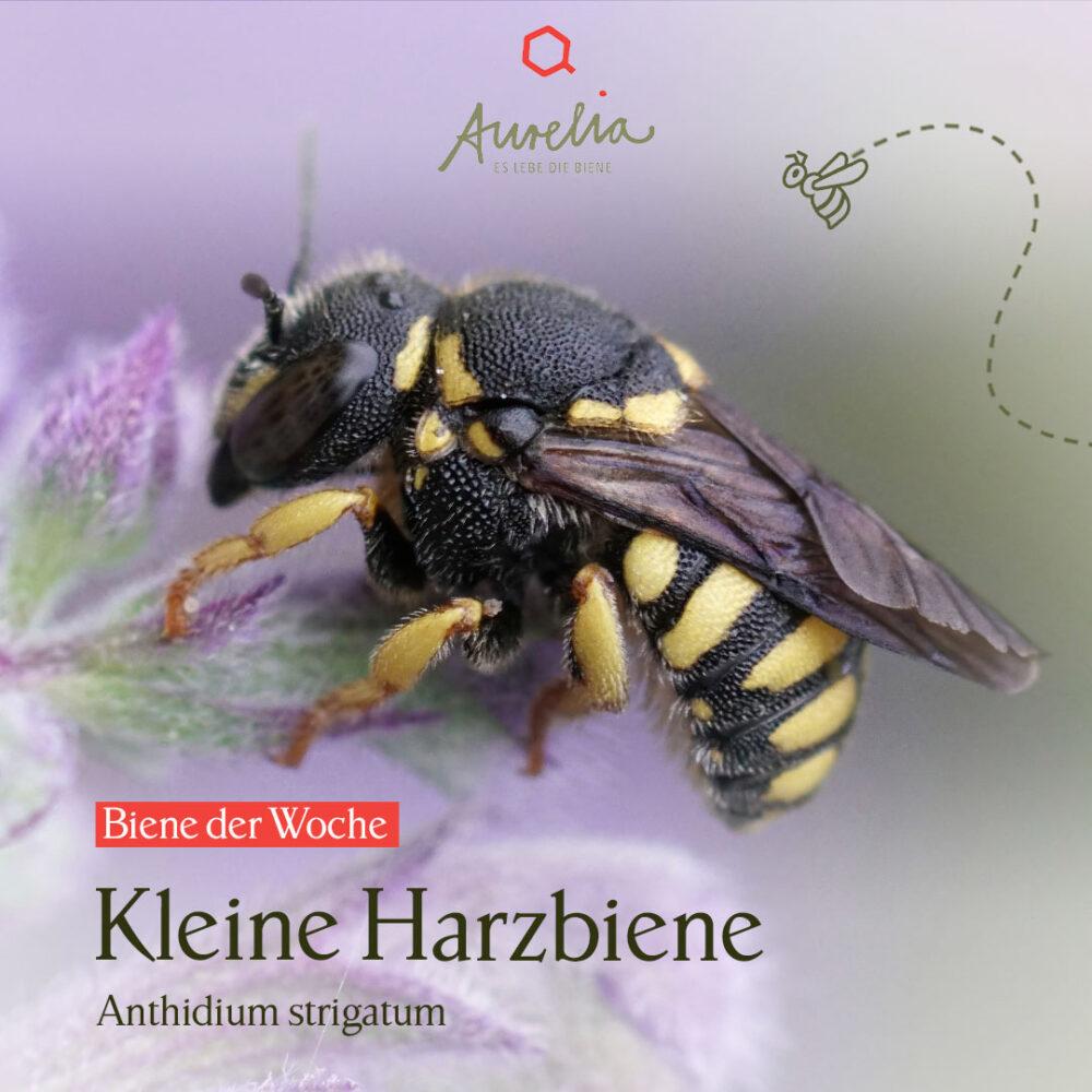 """Die ungewöhnlichen Nester der heutigen """"Biene der Woche� ..."""