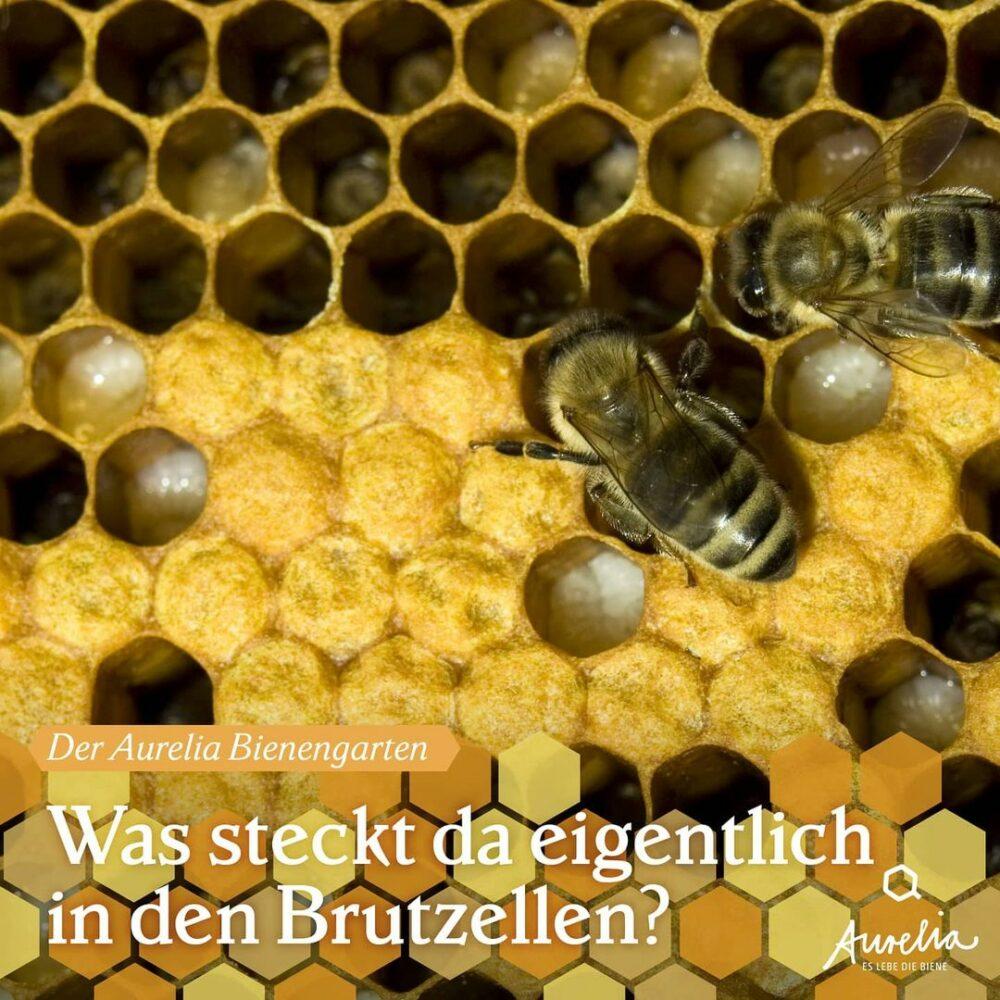 Die Brutsaison in unseren Bienenstöcken ist jetzt in vollem ...